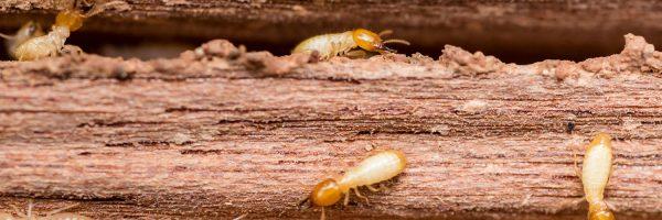 Swift Termite Control Inc